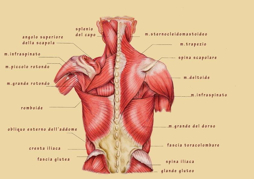 Mal di schiena dove pala al di sinistra